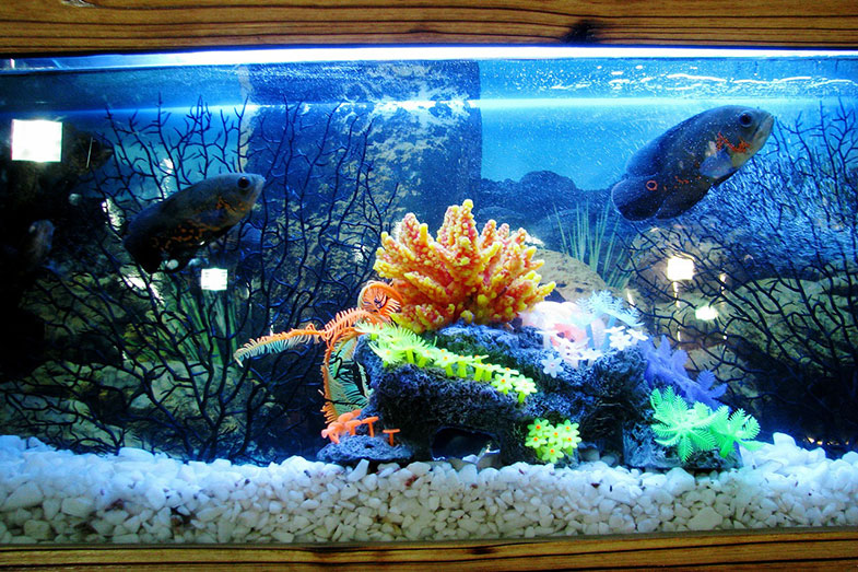 Fish Tank in the Bedroom