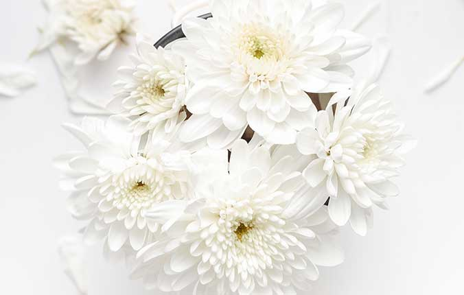 A Dream with White Color