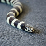 Black and White Snake Dream Meaning