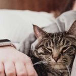 Why Does My Cat Bite Me When I Sleep?