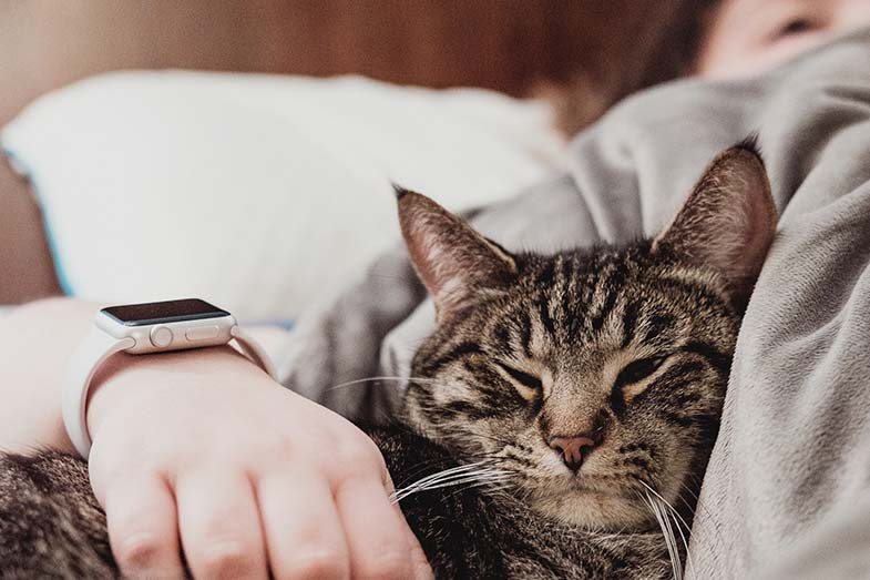 Person Sleeping with Cat