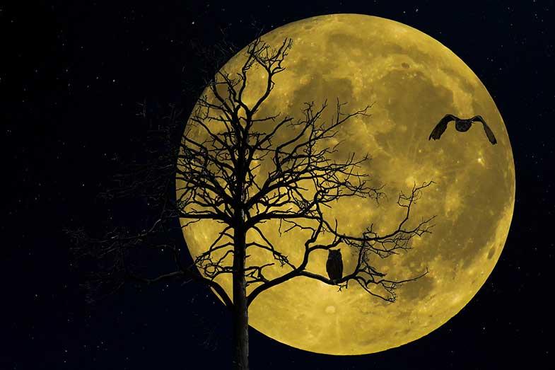 Full Moon Night Owls
