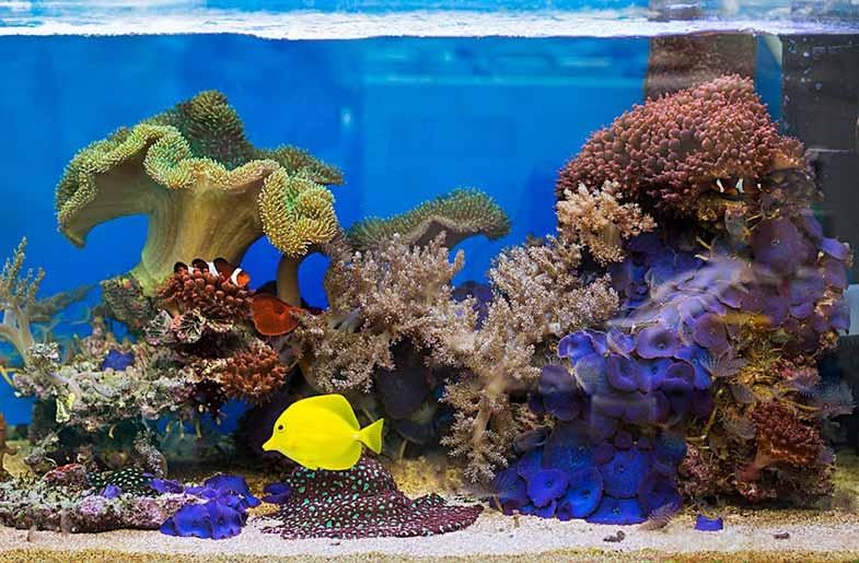 Salt Water Aquarium Fish Tank