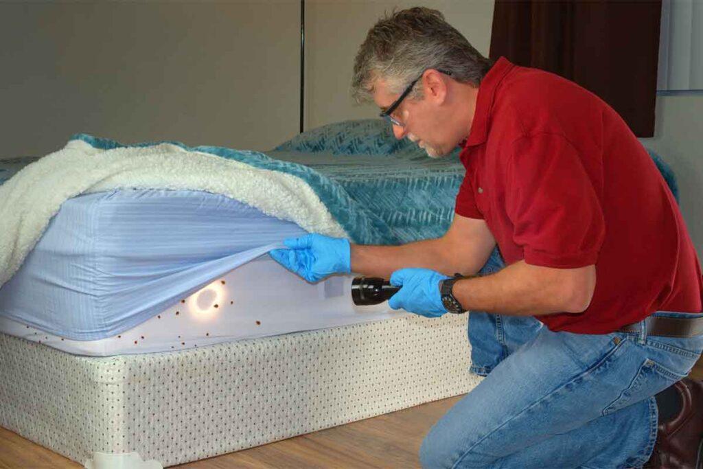 Bed Bug Infestation Service Man